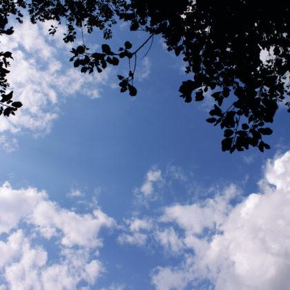 himmel-aeste