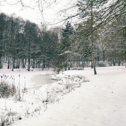 winter-baeume