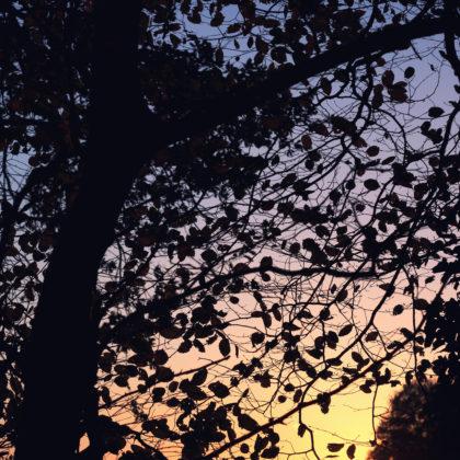 baum-blaetter-sonnenuntergang