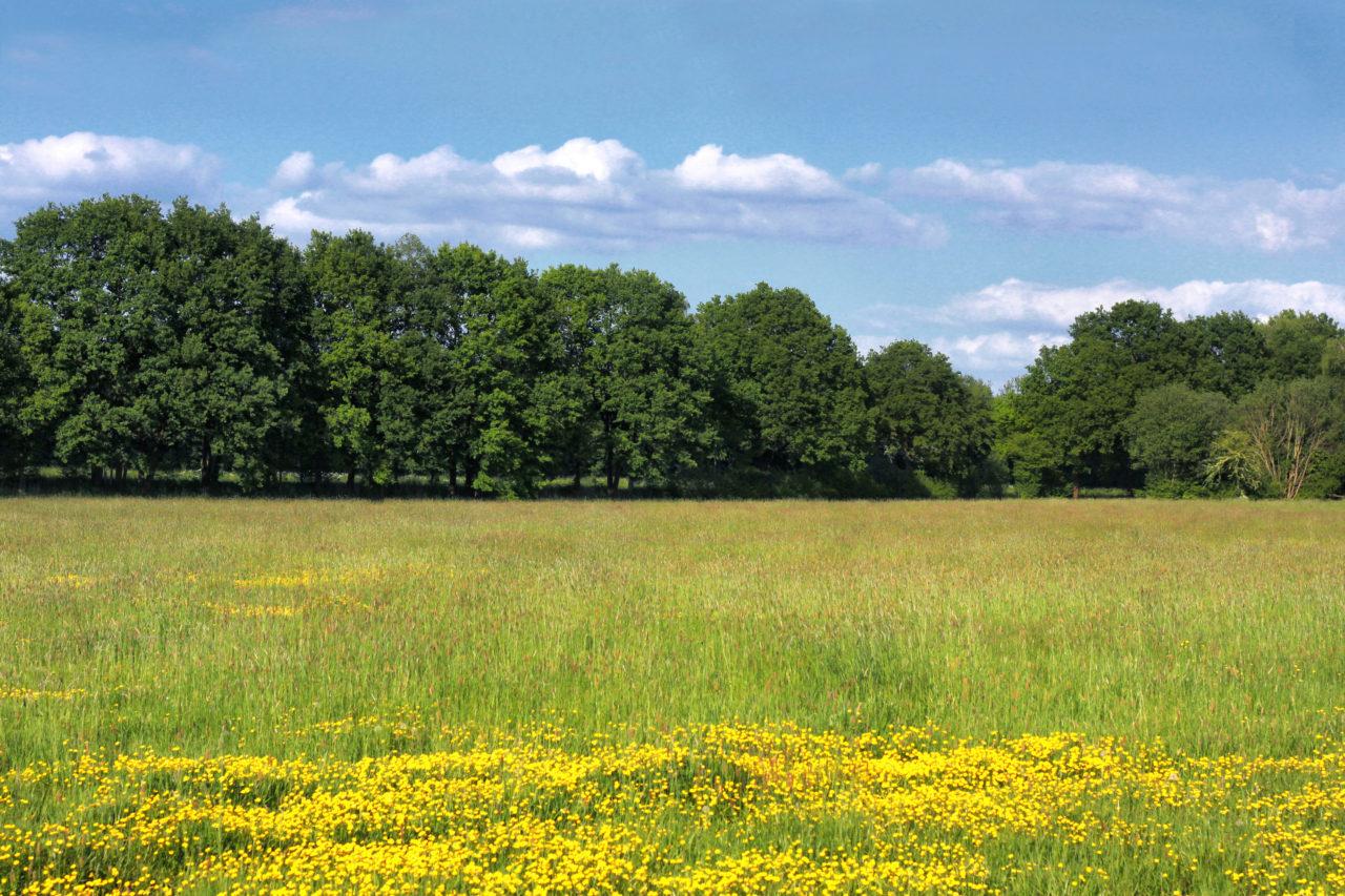 Blumenwiese Landschaft - kostenlose Bilder download | titania foto