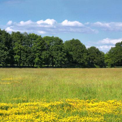 blumenwiese-landschaft
