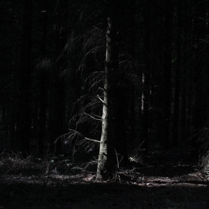 dunkler-wald