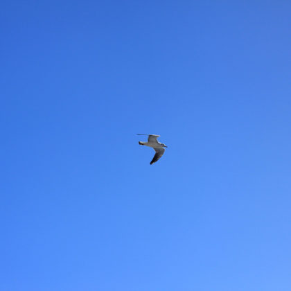 fliegende-moewe