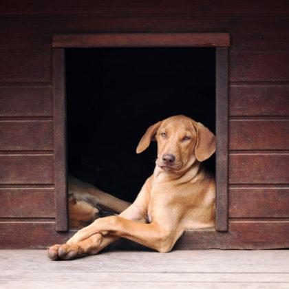 hund-hundehuette
