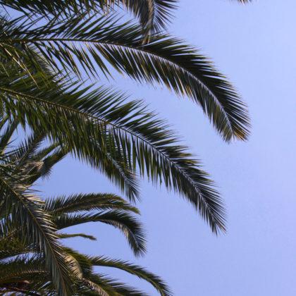 palmenblaetter