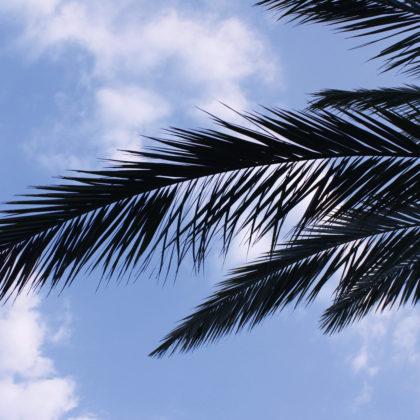 palmenblatt-silhouette