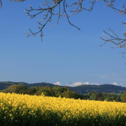 rapsfeld-wiehengebirge