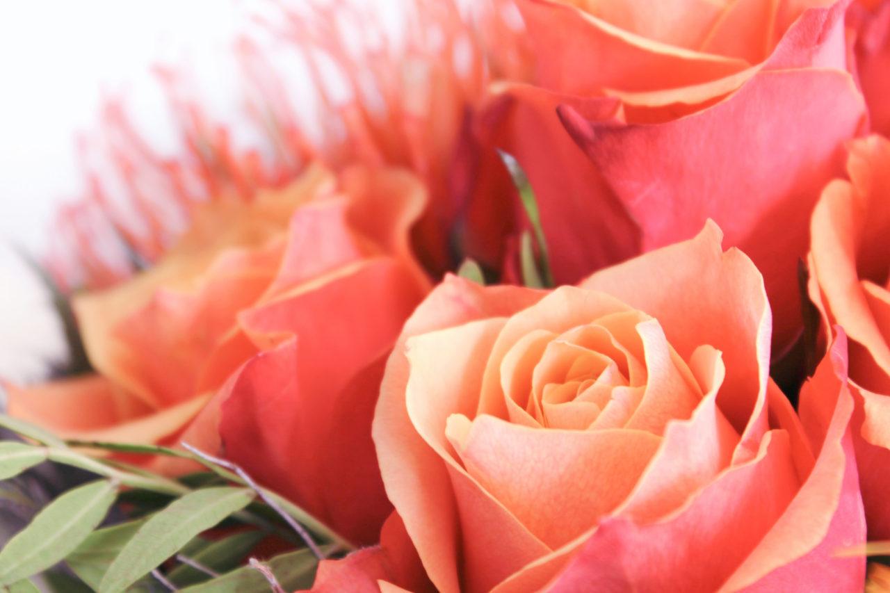 rosen blumenstrauß  kostenlose bilder download  titania foto