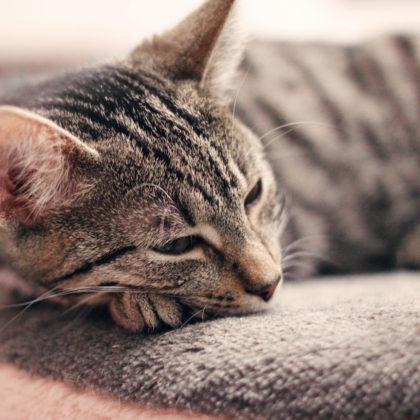 schlafende-katze