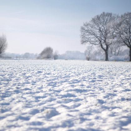 schneelandschaft-feld