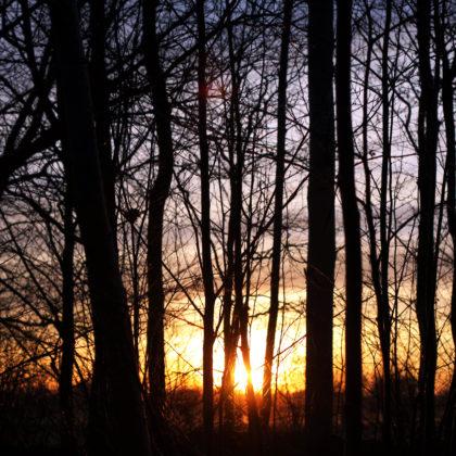 Sonnenuntergang Bäume