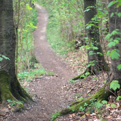 waldweg-wanderweg