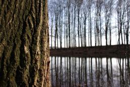 Bäume Winter
