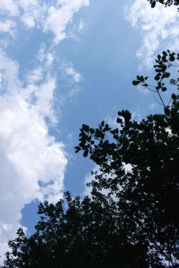 Himmel Bäume