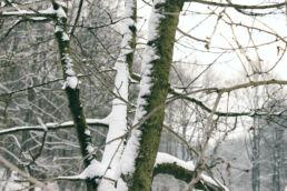 Äste Schnee