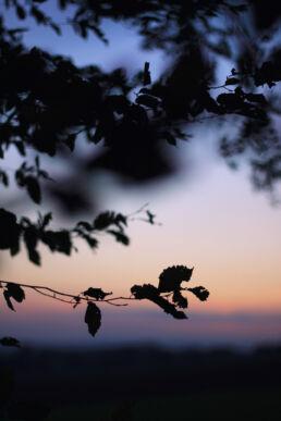 Äste Sonnenuntergang