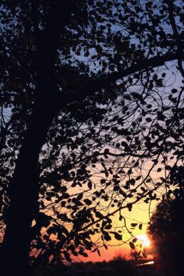 Baum Blätter Sonnenuntergang