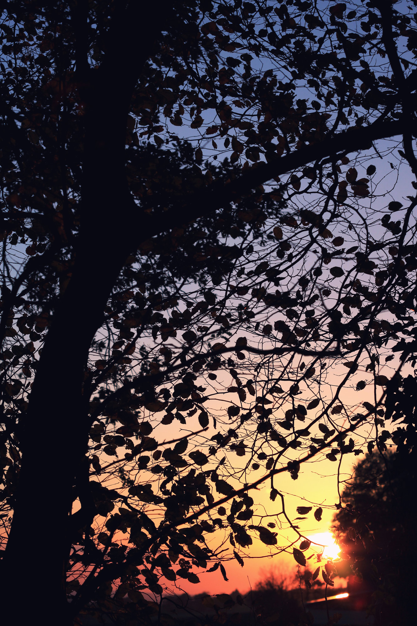 Tree Leaves Sunset