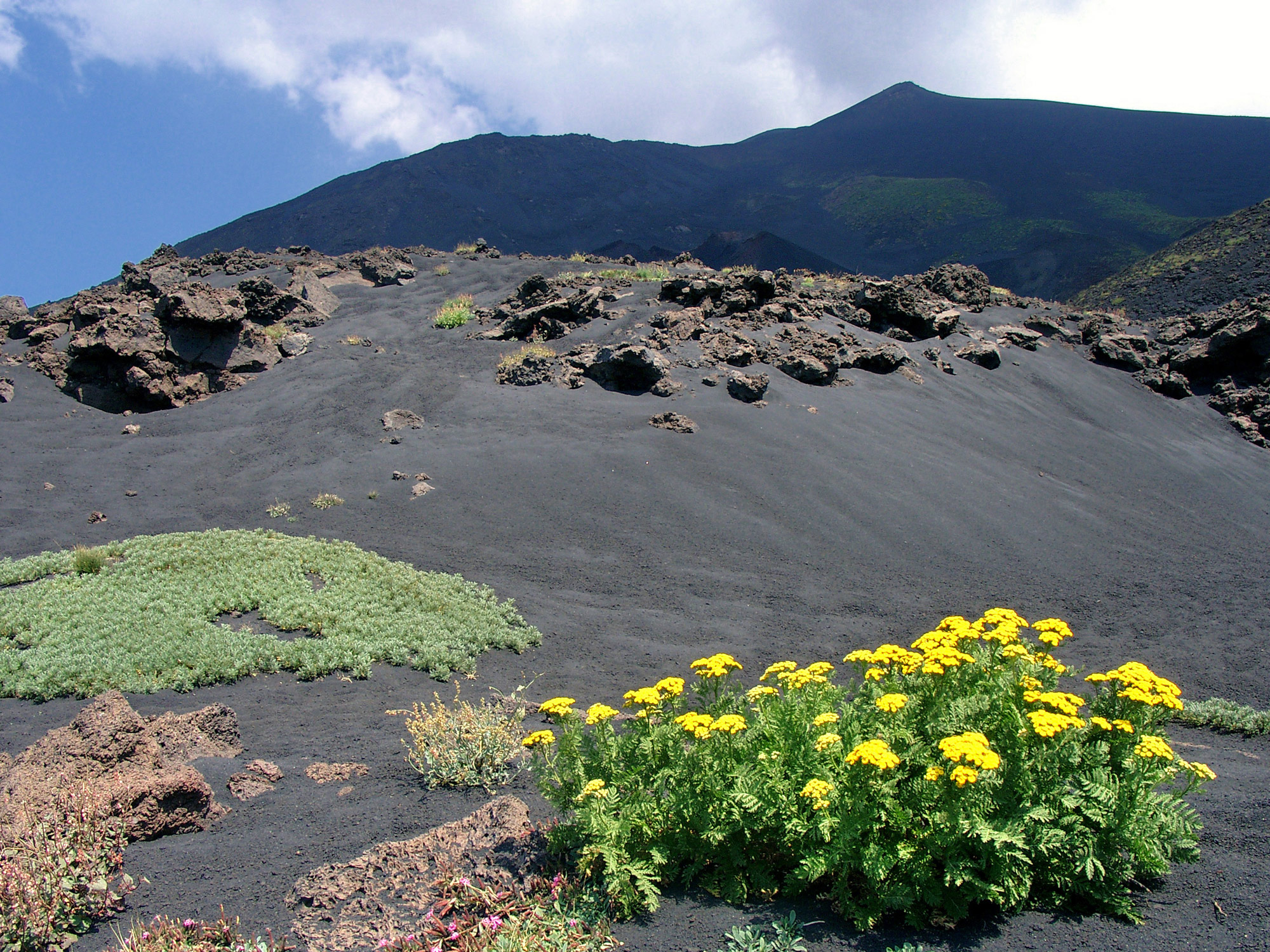Vegetation Mount Etna