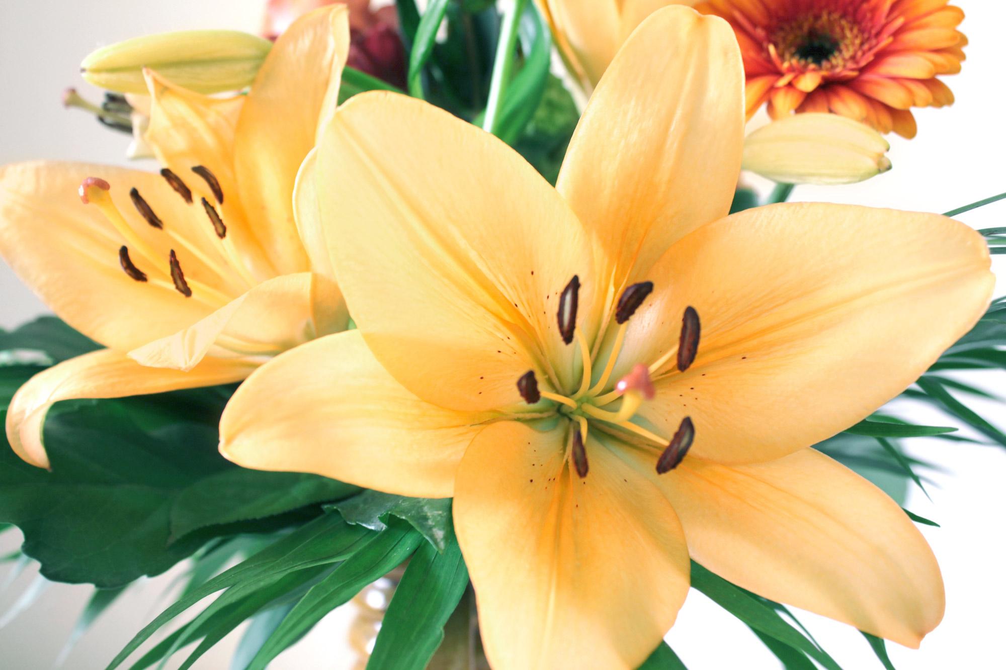 Lilien Blumenstrauß