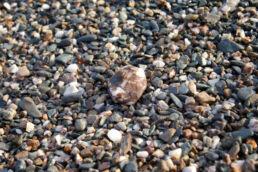 Nasse Steine Strand