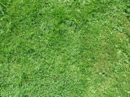 Rasen Wiese