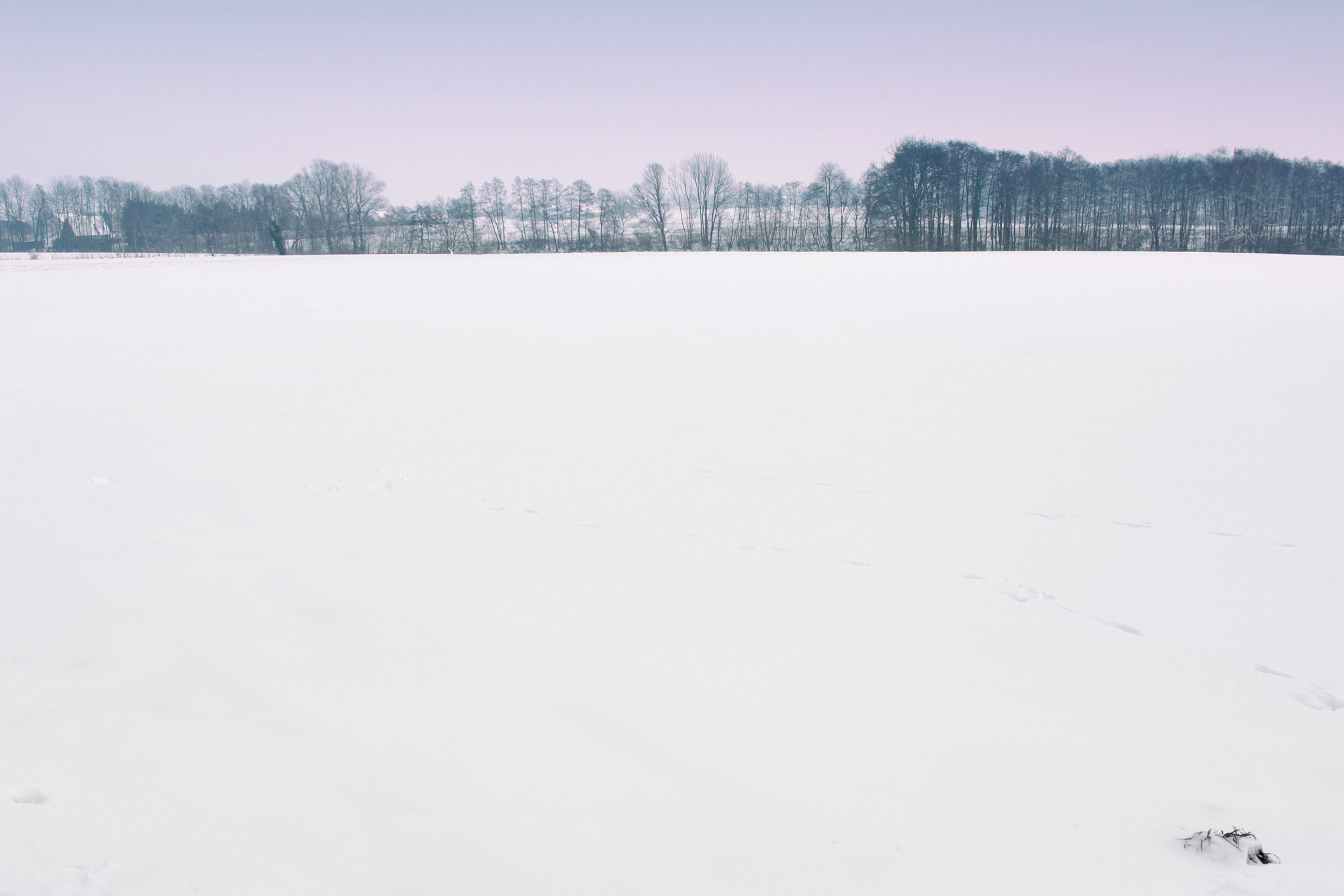 Snowscape Fields