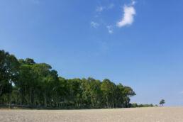 Strand Bäume