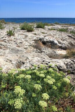 Vegetation Küste