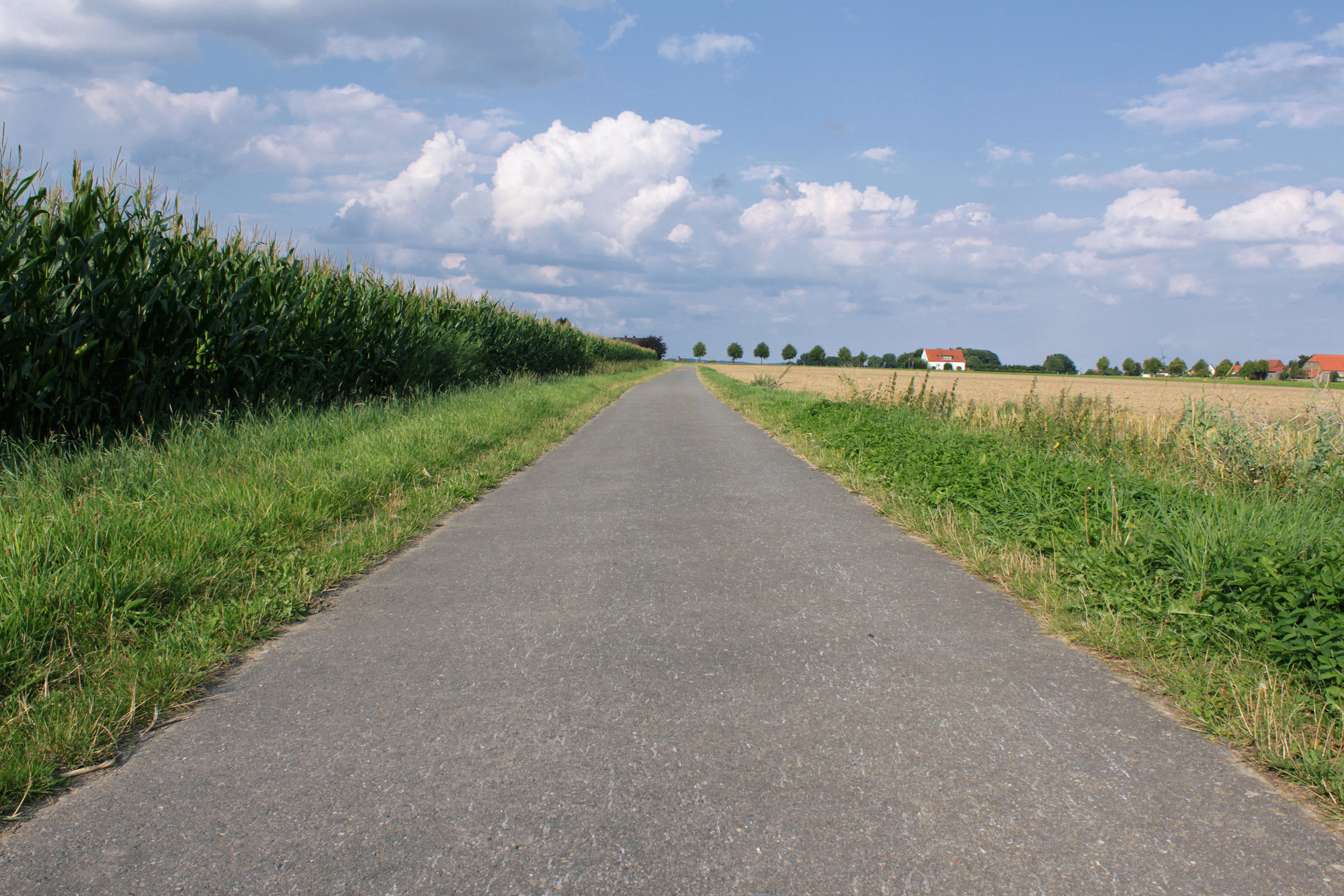 Path Fields