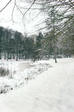 Winter Bäume