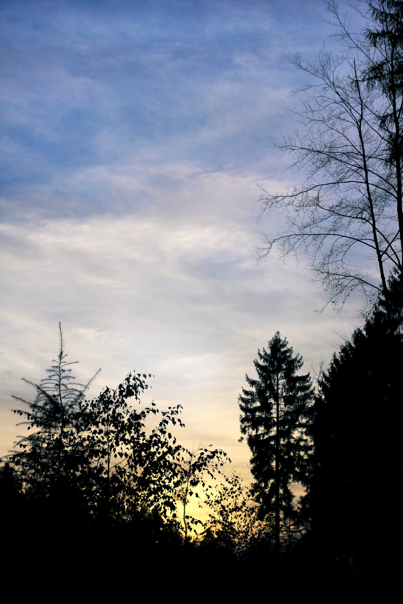 Trees Silhouettes Evening