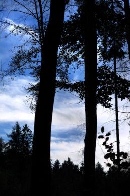 Bäume Silhouetten
