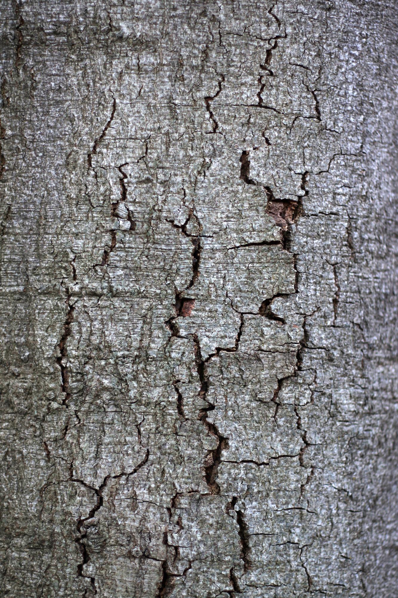 Baumrinde Textur