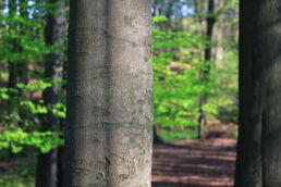Baumstamm Wald
