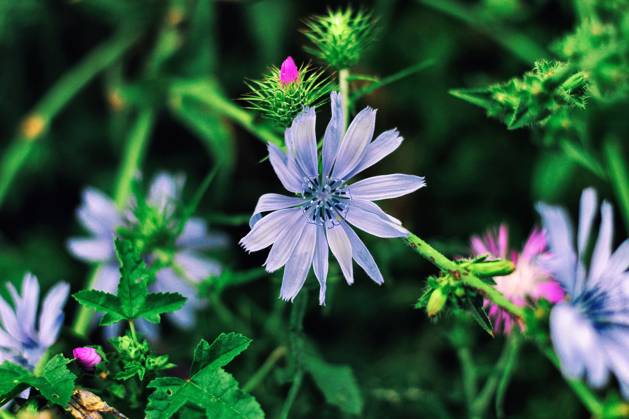 Blüten Wiese