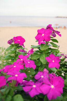 Blumen Strand