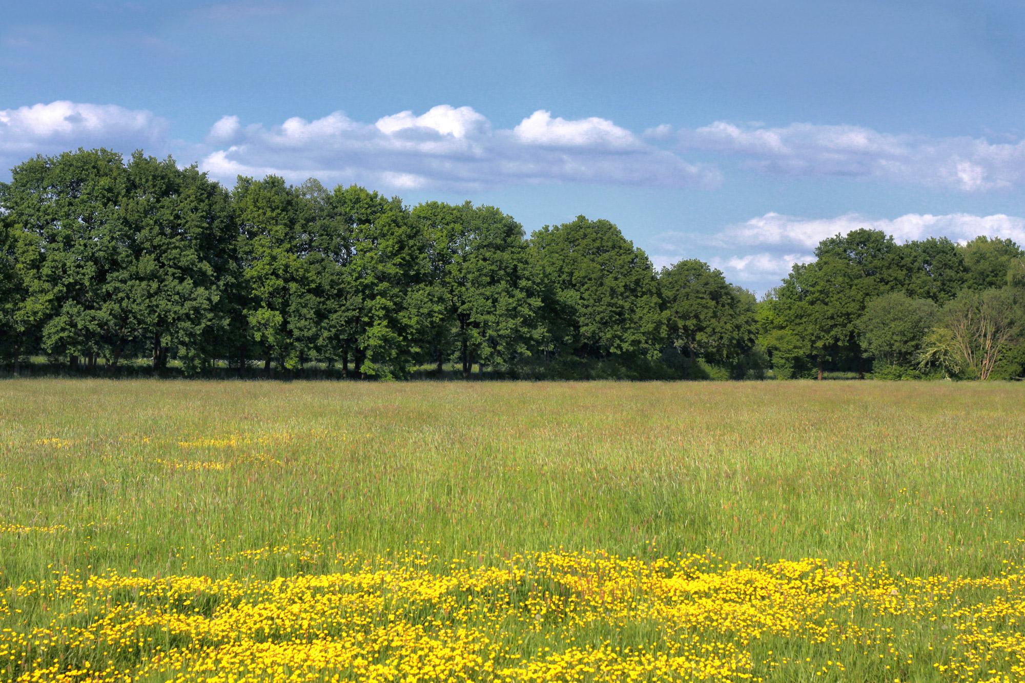 Blumenwiese Landschaft