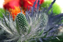 Distel Blumenstrauß