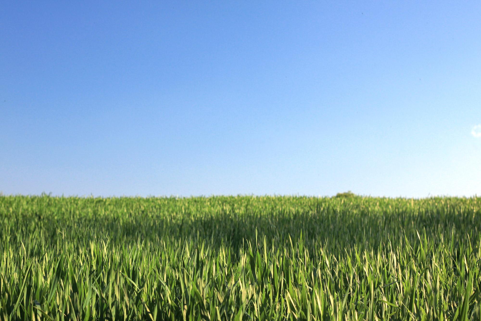Feld blauer Himmel