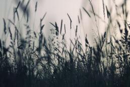 Gräser Hintergrund