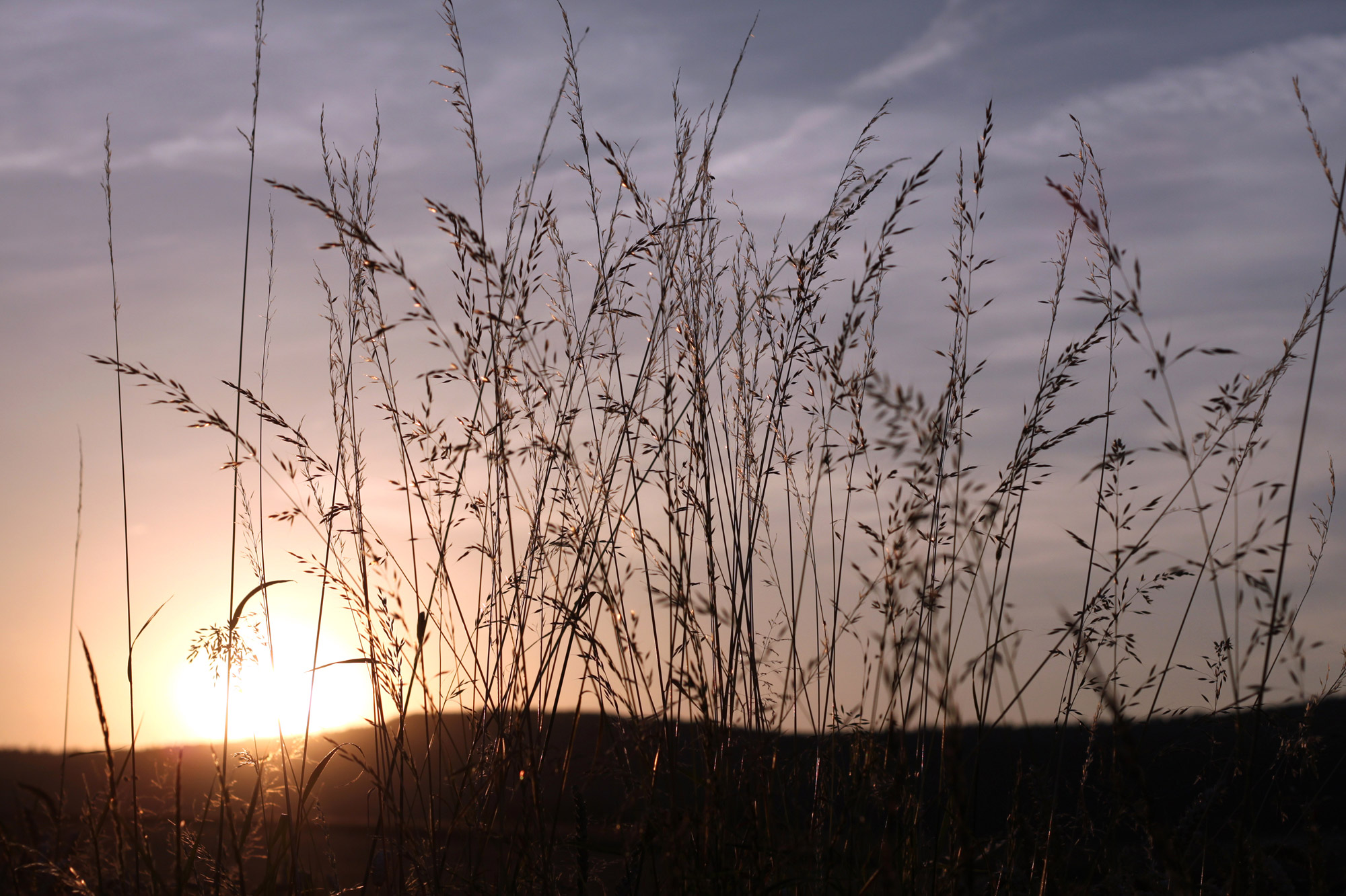 Gasses Sunset
