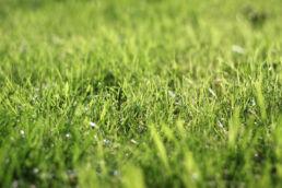 Gras Wiese