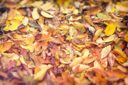 Herbstlaub Blätter