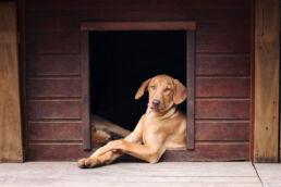Hund Hundehütte