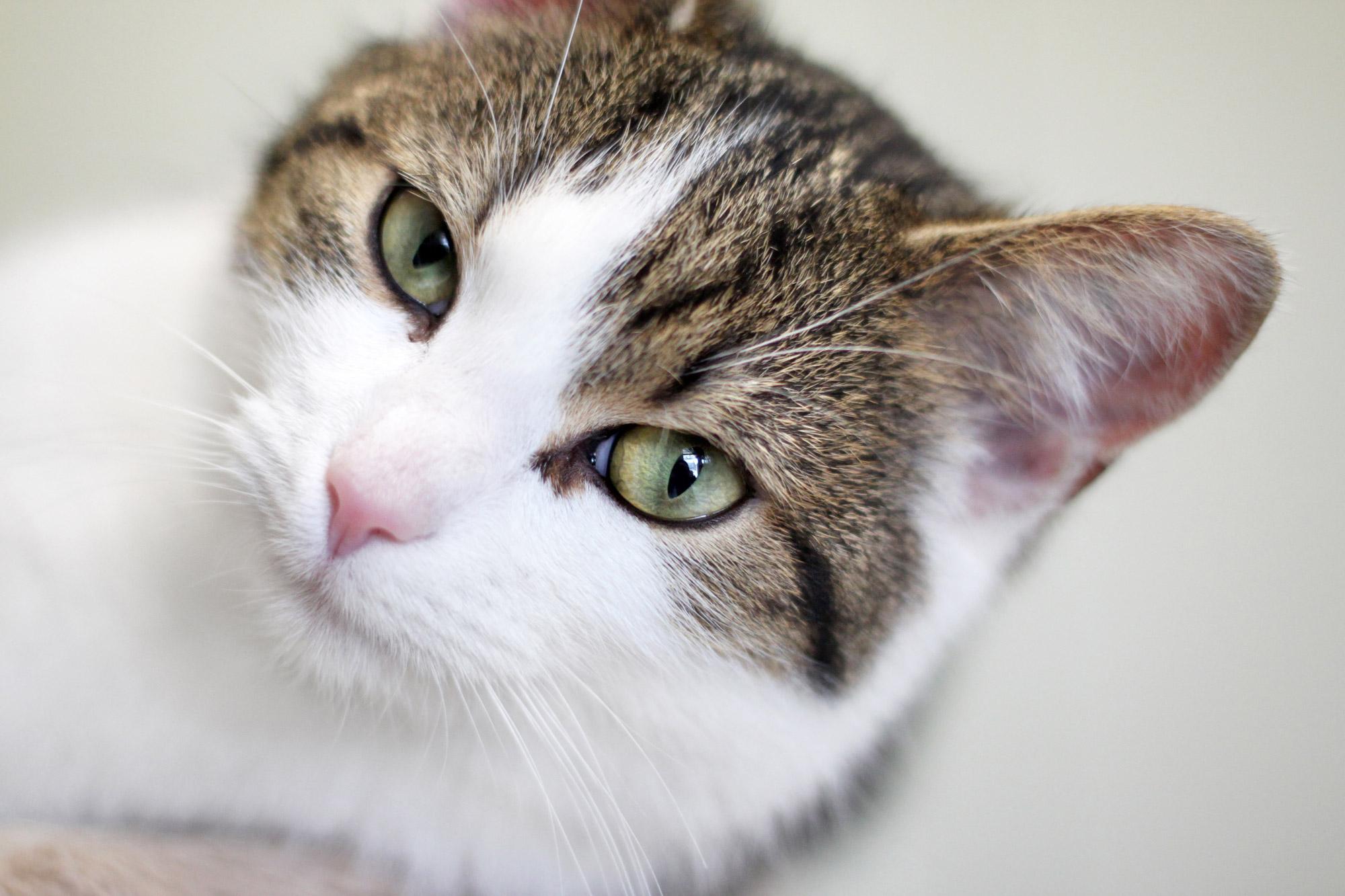Katze Kater