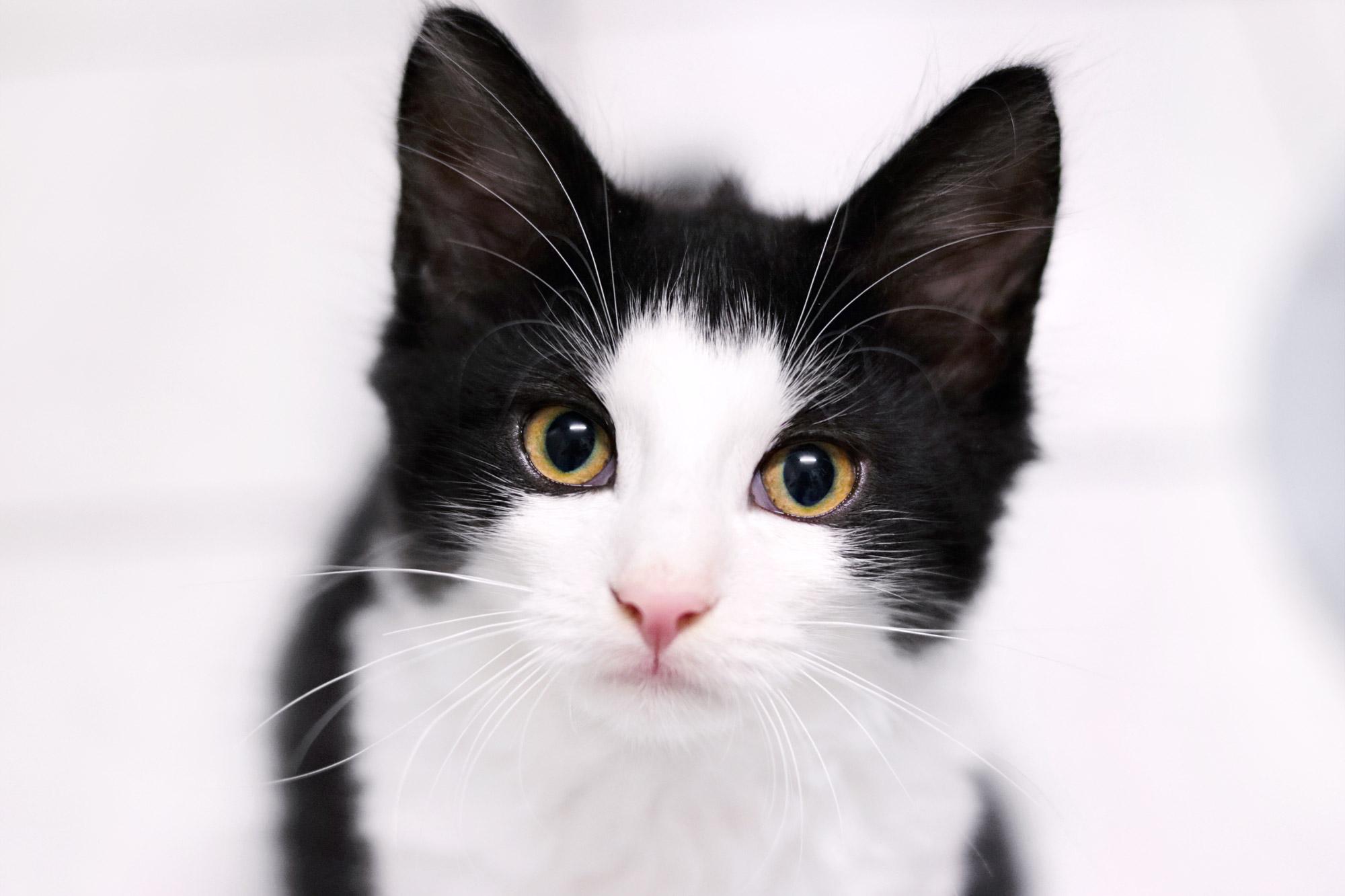 Katze schwarz weiß
