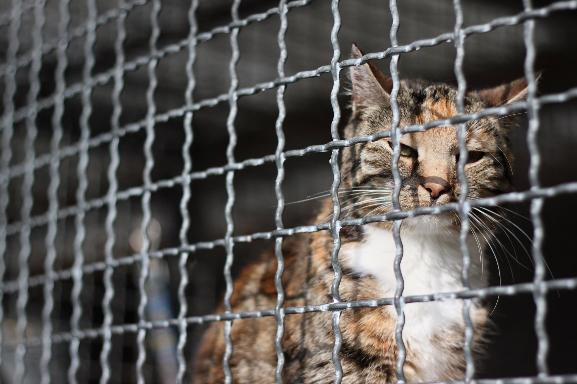 Cat Shelter