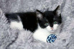 Katzenbaby mit Ball