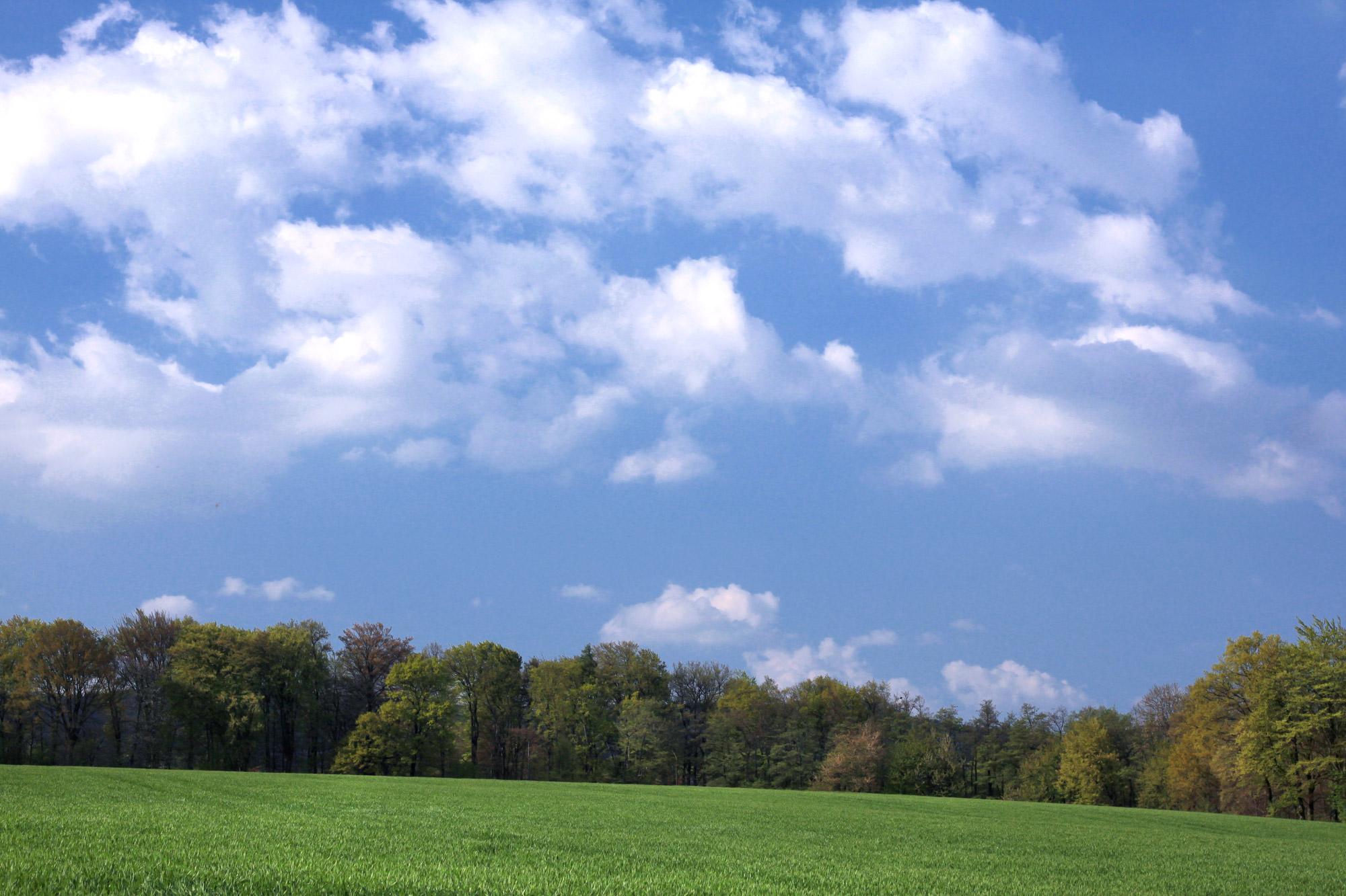 Landschaft Bäume